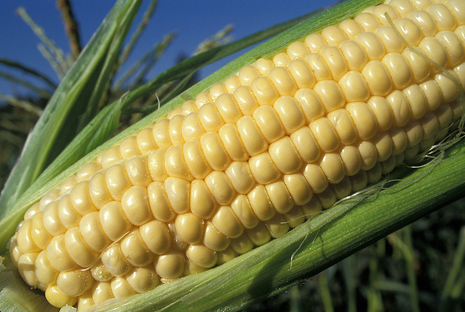 Corn Jelly